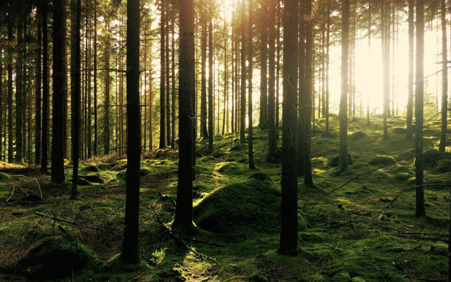 I Grew up in the Woods: A Look at Mindfulness and Nature