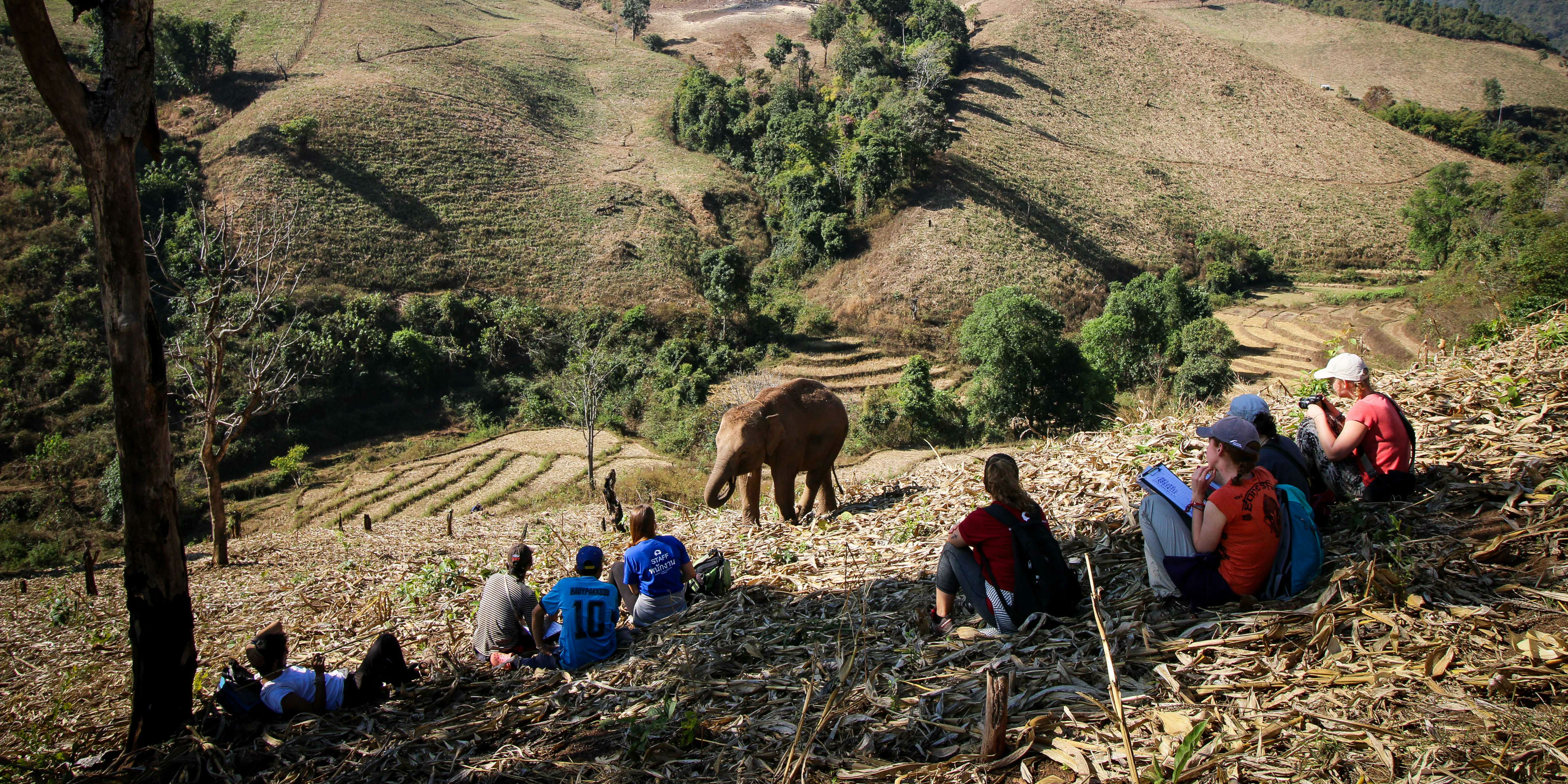 volunteer with elephants