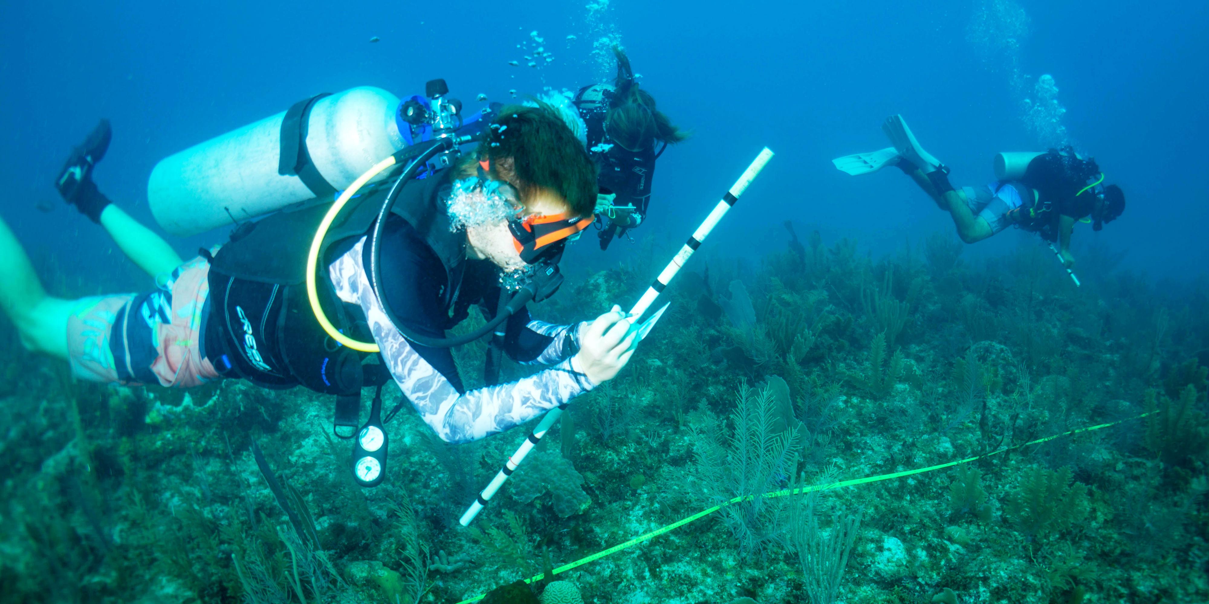 puerto morelos snorkeling