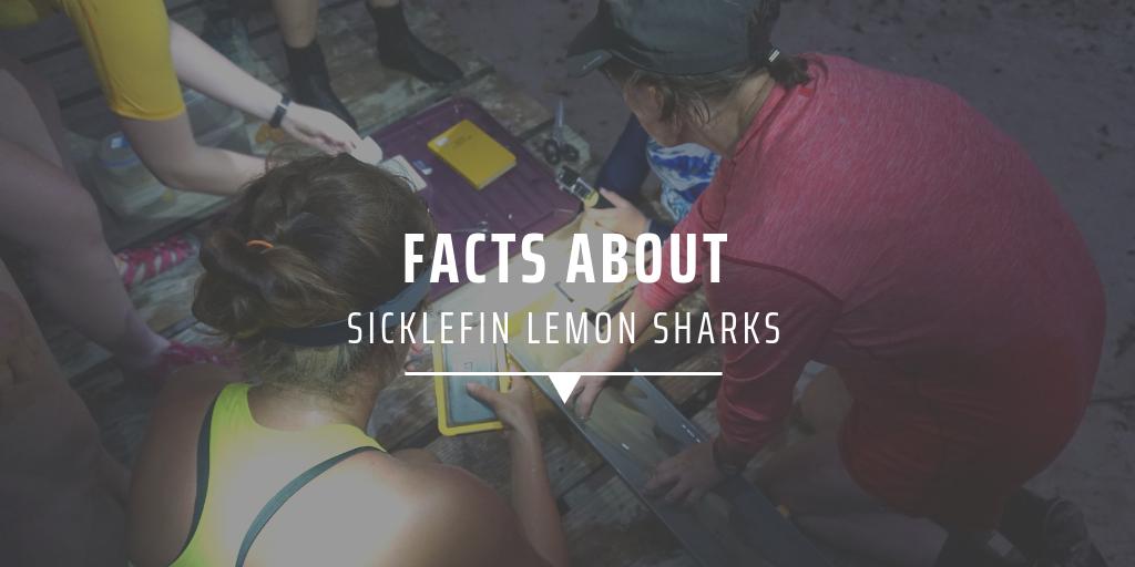 shark facts
