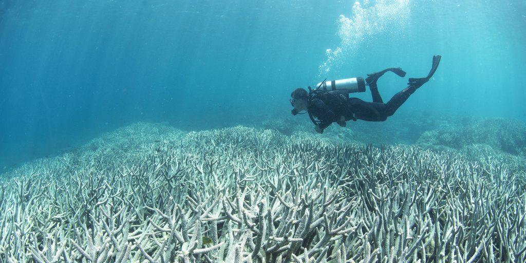 A diver explores the ocean floor that has gone through acidification.