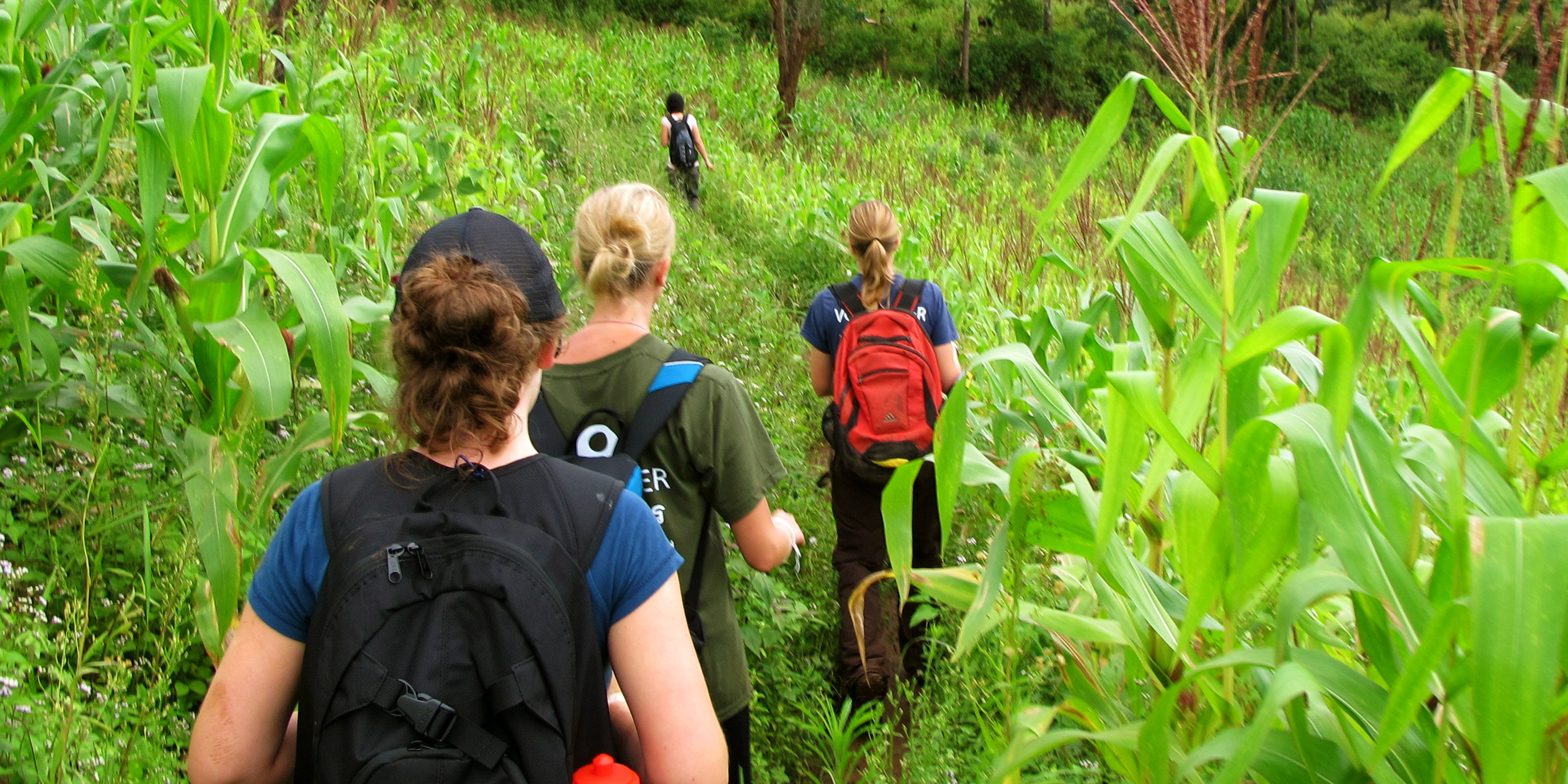 GVI participants travel in India and hike through the hills of Kerala.