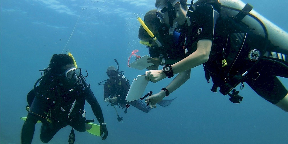 GVI PADI diving participants record data underwater.