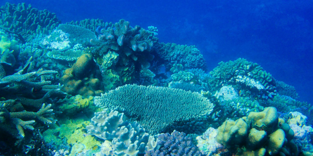 Natural coral reef habitats have been affected by the Covid-19 outbreak