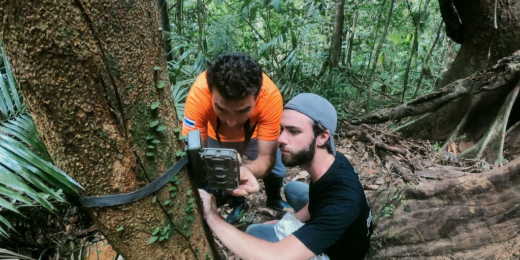 data collection and animal tracking are vital to conservation efforts, learn these skills with GVI volunteer programs.