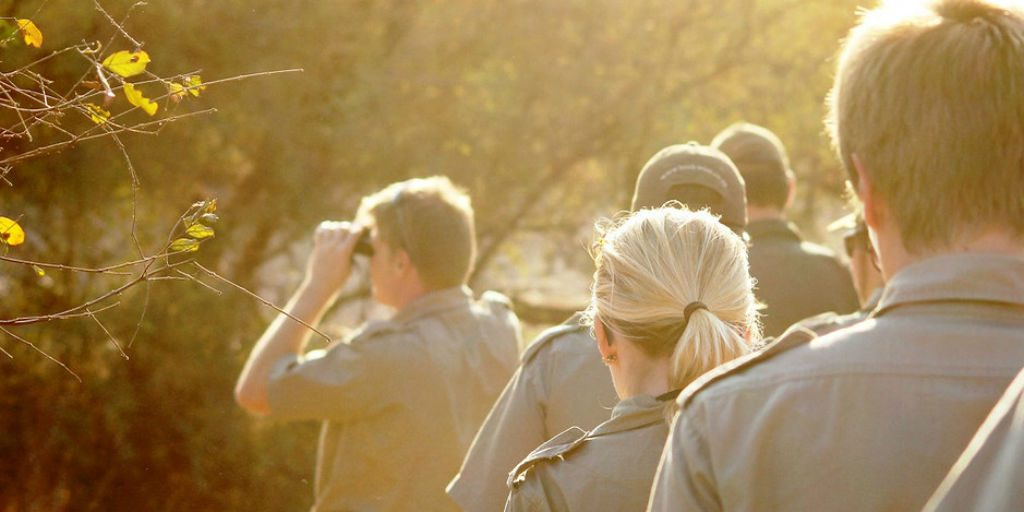 volunteer with wildlife in South Africa