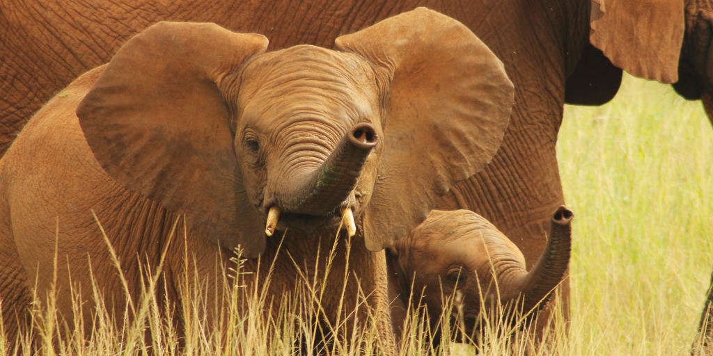 Volunteer to help elephants in South Africa