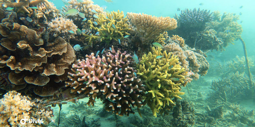 Favourite gap year ideas involve coral reef surveying in Fiji.