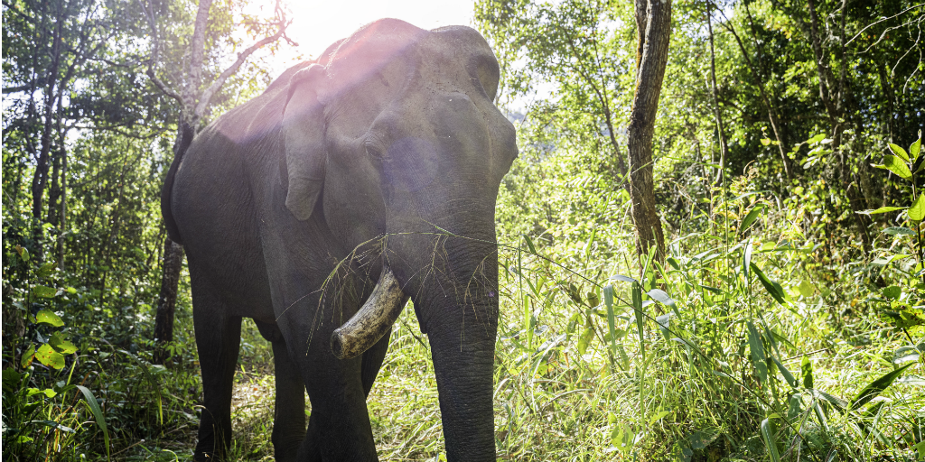 Skip the rides and ethically volunteer with elephants in Thailand instead