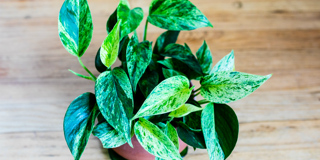 experience better breathing with indoor house plants