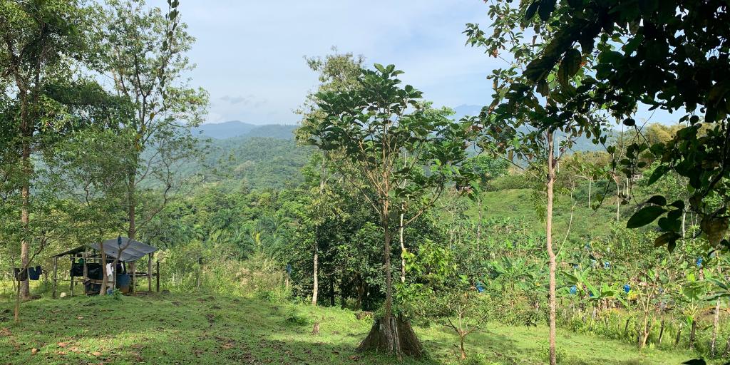 Cimarrones, Costa Rica