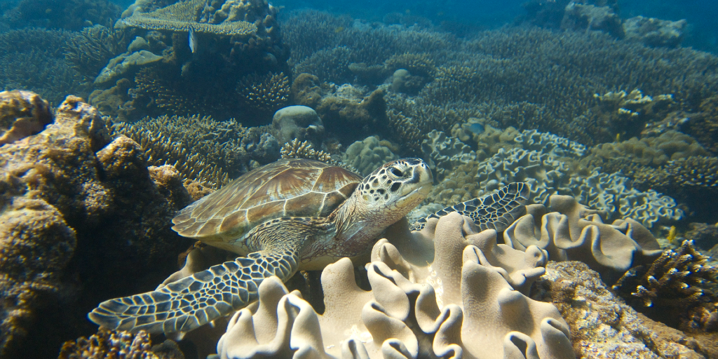 The well-being of coral reefs form part of the marine conservation internship in Seychelles.