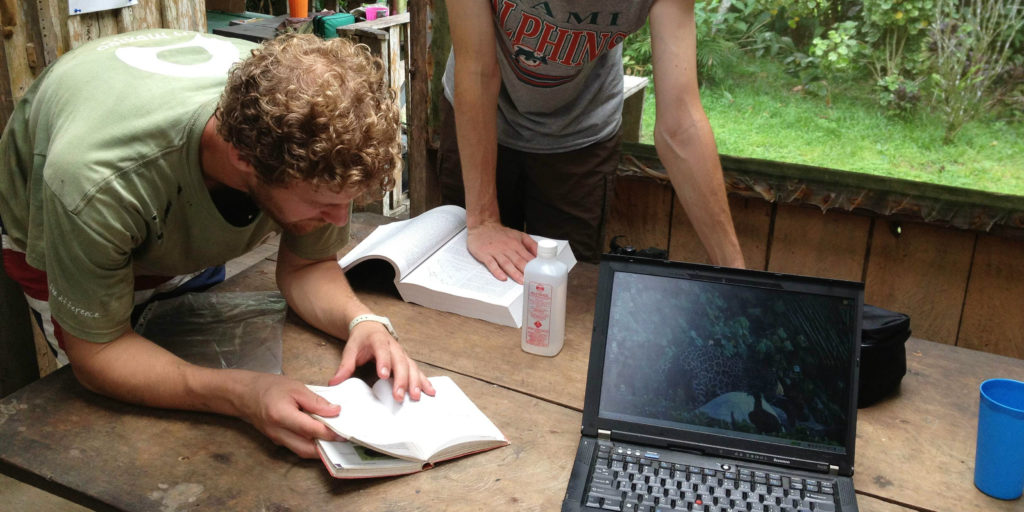 GVI volunteers are busy with some research during their work experience program.