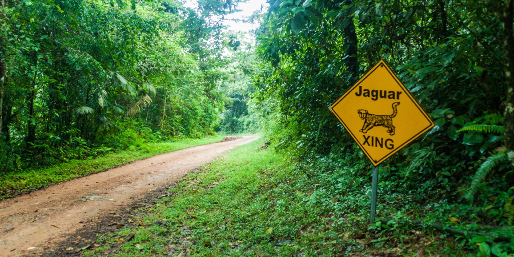 A path in the Cockscomb Basin Wildlife Sanctuary and Jaguar Preserve in Belize.
