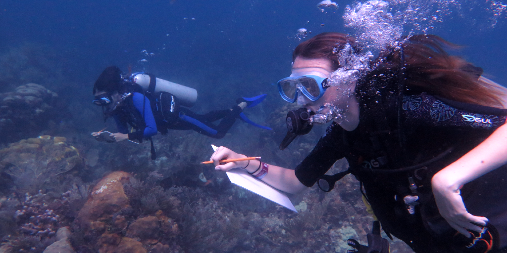 You are able to earn your PADI certificate with GVI.