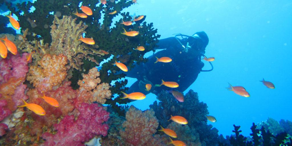 A GVI volunteer explores the marine ecosystem during their scuba diving course.