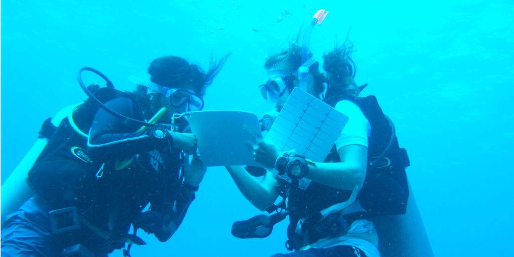 You can obtain a professional diving qualification while on a GVI career internship.