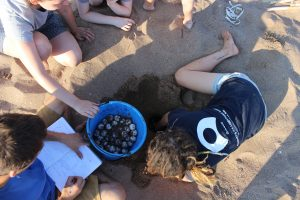 Conducting research with a turtle nest in Greece