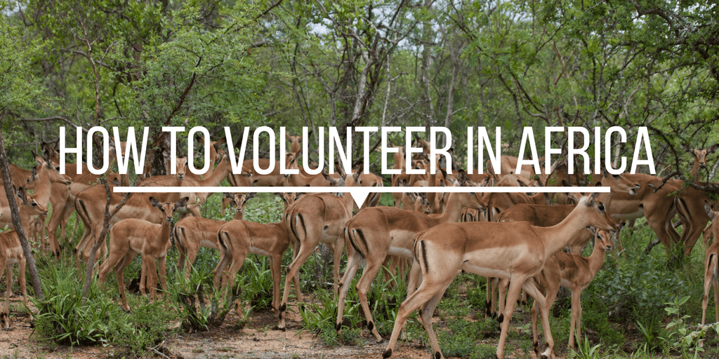How to volunteer in africa