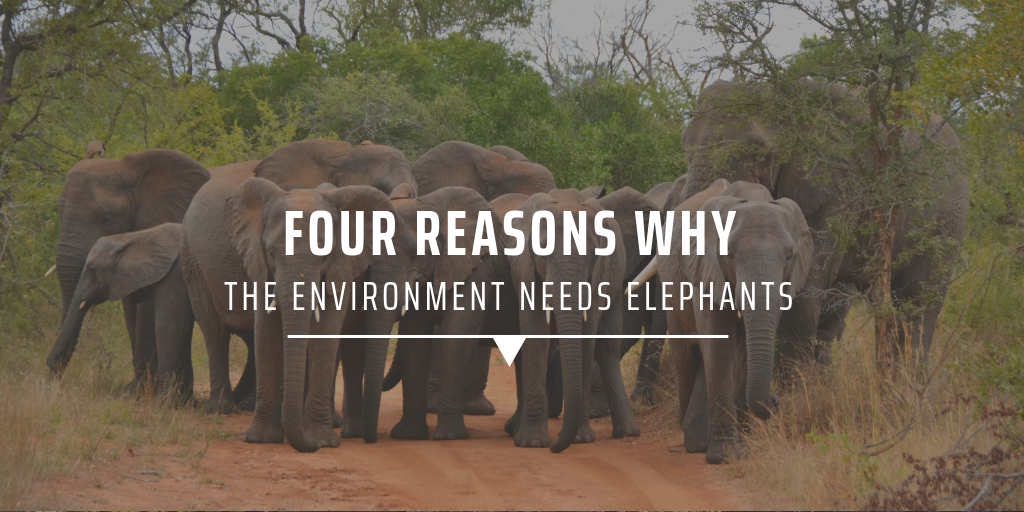 Four reasons why the environment needs elephants