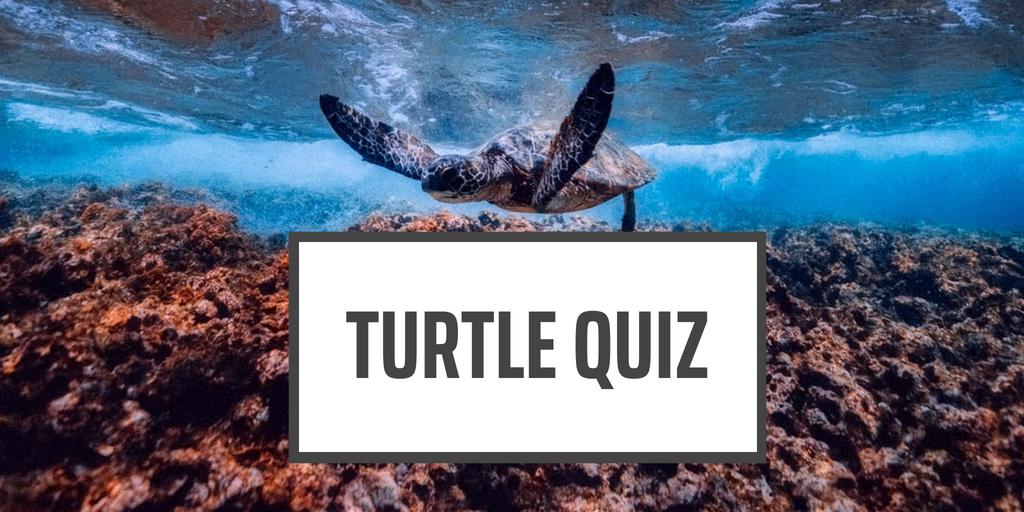 Turtle Facts Quiz
