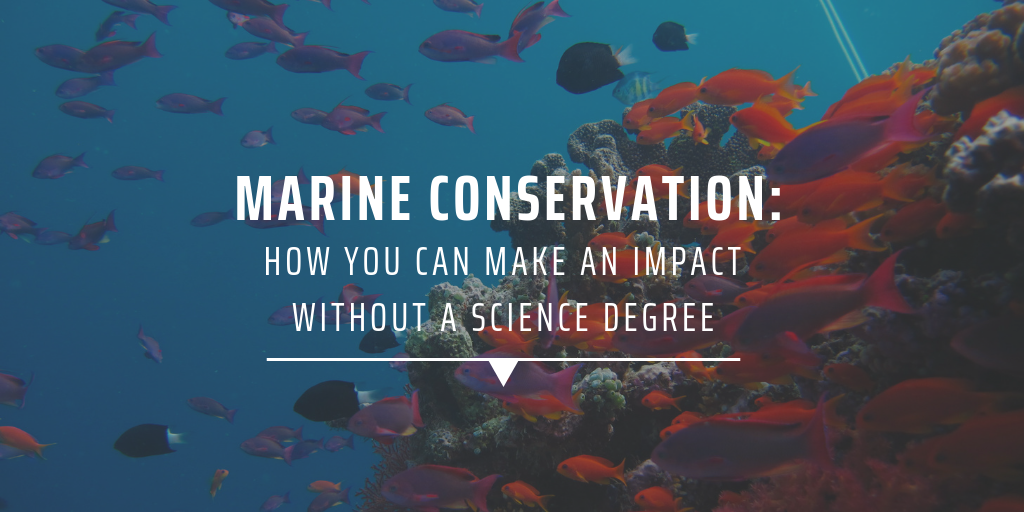 Marine conservation How you can make an impact without a science degree
