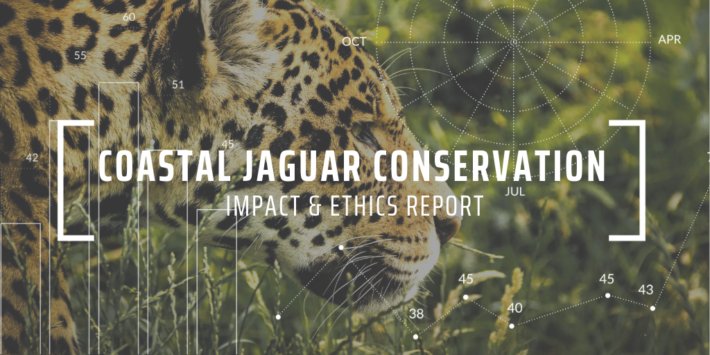 Studying jaguar-turtle predation behaviour with Coastal Jaguar Conservation