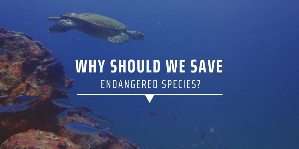 Why should we save endangered species
