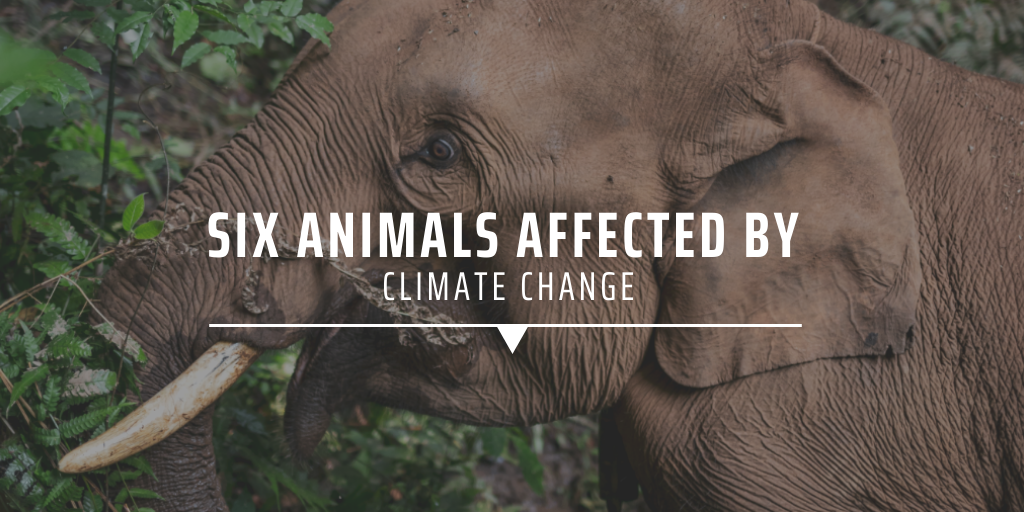 Six animals affected by climate change