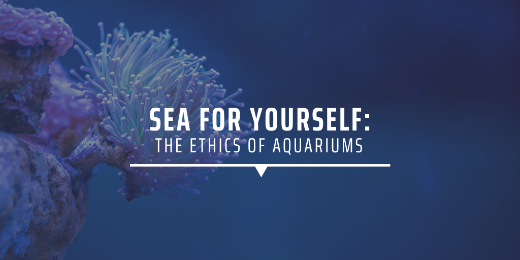 Sea for yourself the ethics of aquariums