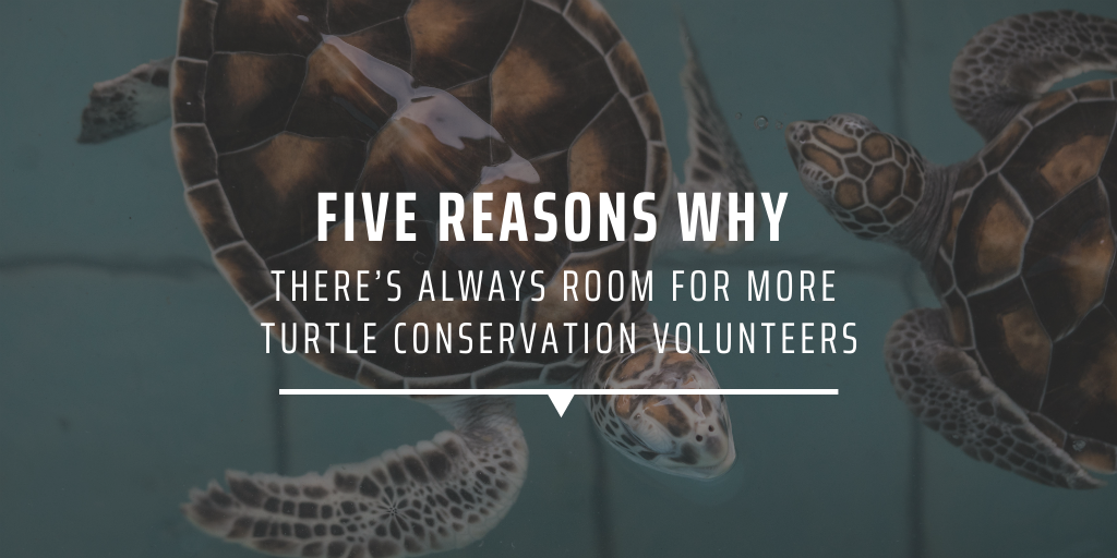 Five reasons why there's always room for more turtle conservation volunteers