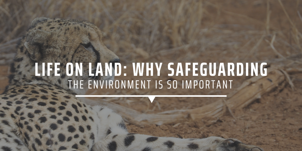 Life on land: Why safeguarding the environment is so important